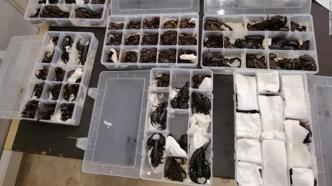 Sri Lanka: Chinese man caught smuggling 200 scorpions