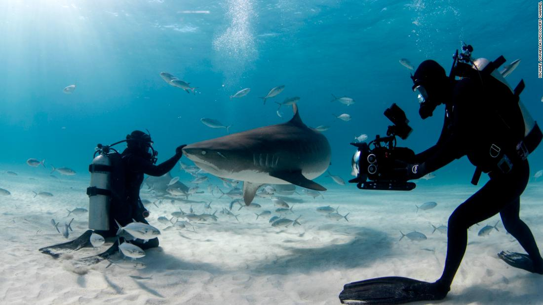 Sharks don't film themselves. Meet the man who does