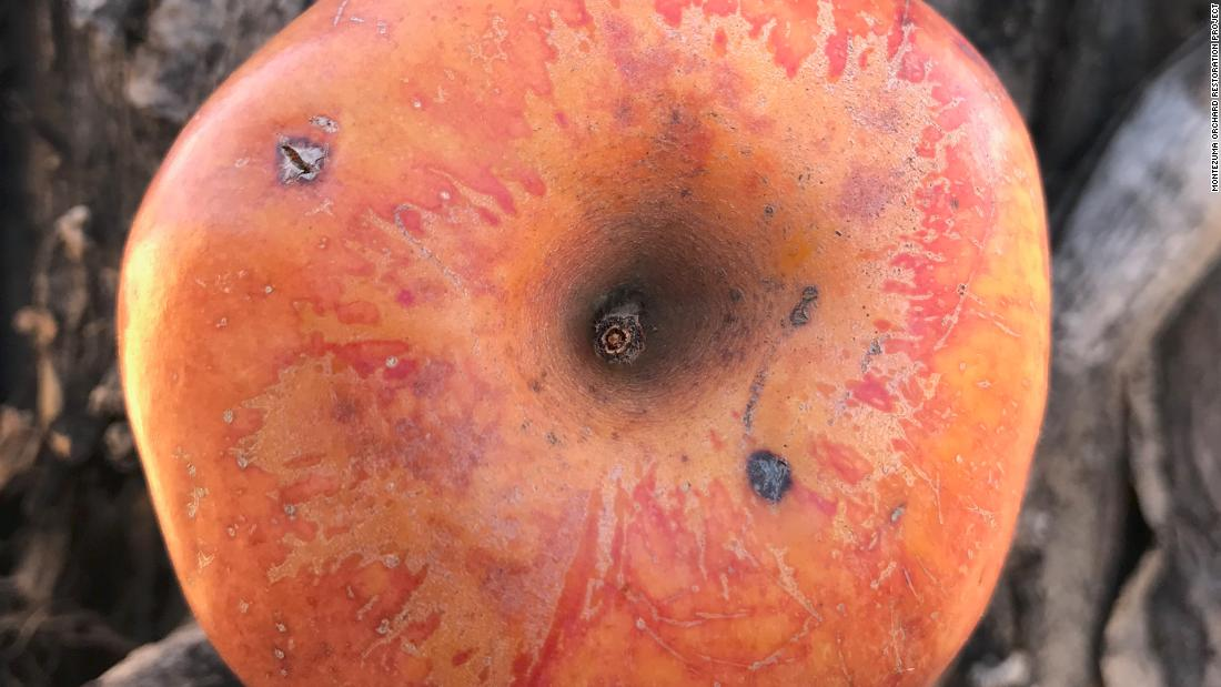 A 20-year hunt to find an extinct fruit
