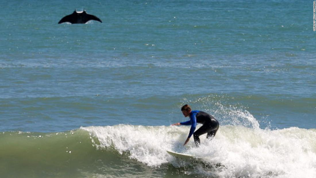 A giant manta ray photobombed a surfer in Florida